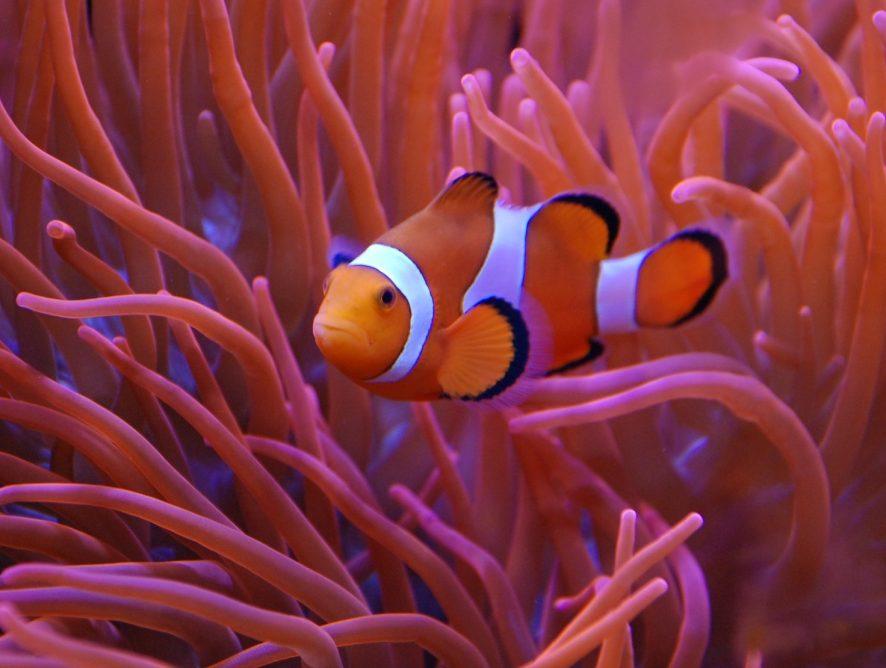 Der neue farbenfrohe Trendbotschafter 2019: Koralle.