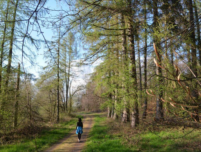 Der Wald mein Therapeut